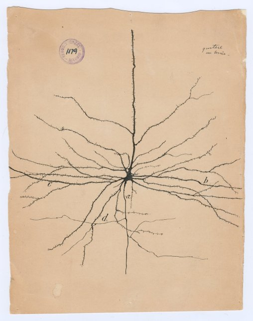 cajal-neurons